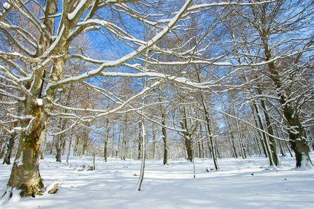alava: Los bosques cubr�an con nieve en Opakua, Alava (Espa�a) Foto de archivo