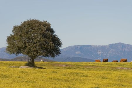 extremadura: Dehesa, Extremadura (Spain)