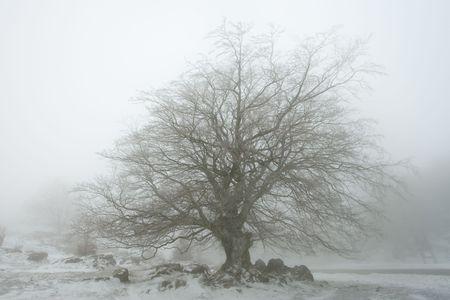 navarra: Tree in Urbasa, Navarra, Spain Stock Photo