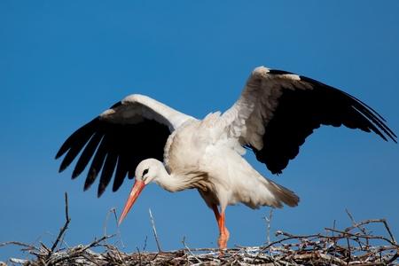 alava: Stork, Vitoria, �lava, Espa�a Foto de archivo