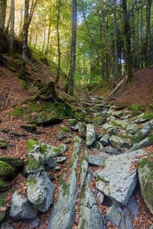 selva: Forest in the Selva de Irati, Navarra, Spain Stock Photo