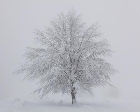 alava: Tree snow covered in Opakua, Alava, Spain Stock Photo