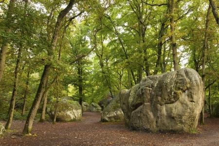 ile de france: Forest of Fontainebleau, Seine-et-marne, Ile de France, France