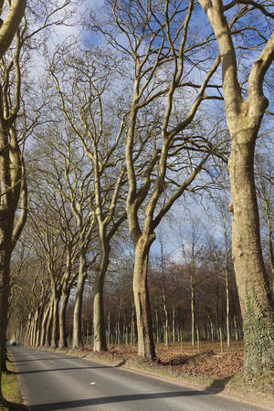 vaux: Forest in the castle of vaux-le-vicomte, Mainsy, Seine-et-Marne, France