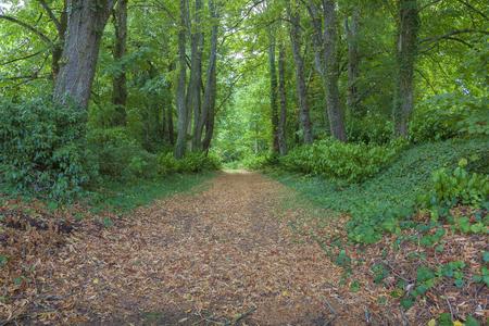 pays: Forest in Lavardin, Sarthe, Pays de la Loire, France
