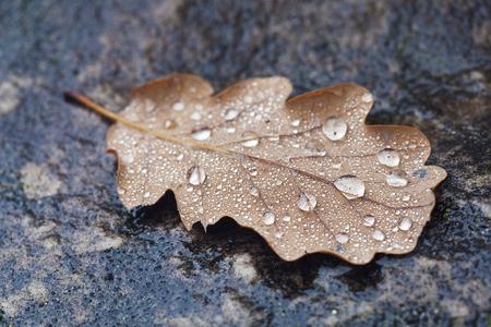 sopping: Autumn in Fontainebleau, Seine-et-marne, Ile de France, France