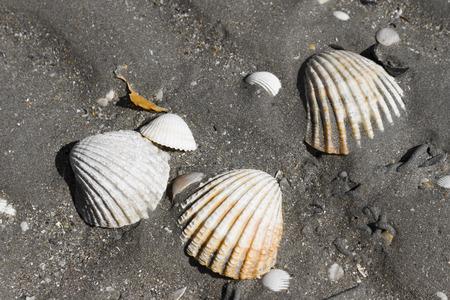 bretagne: Shells in the beach of Plerin, Bretagne, France