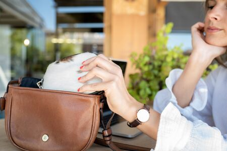 Nice blonde girl takes out her elegant handbag.Concept of beauty and business. 스톡 콘텐츠