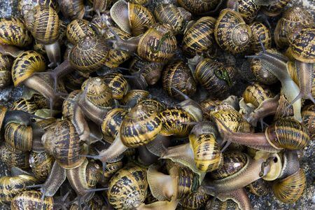 A bunch of snails on top of each other