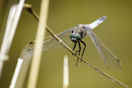 dragonfly sitting on a branch with yellow background and some branches in the front