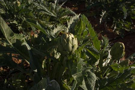 Agricultura mediterr? Nea Foto de archivo - 34244496