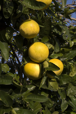 agricultura: Agricultura mediterr?nea