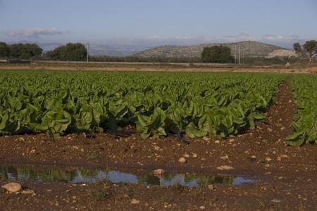 Agricultura mediterr? Nea Foto de archivo - 34244569