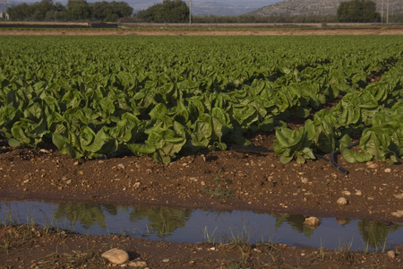 Agricultura mediterr? Nea Foto de archivo - 34244588