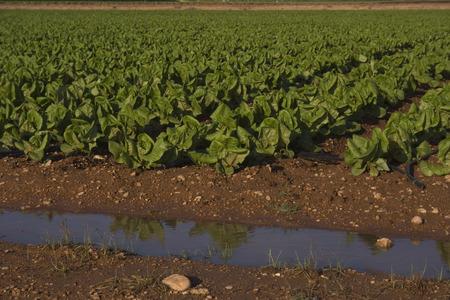Agricultura mediterr? Nea Foto de archivo - 34244601