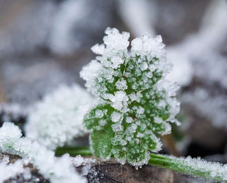 wheater: ice plant