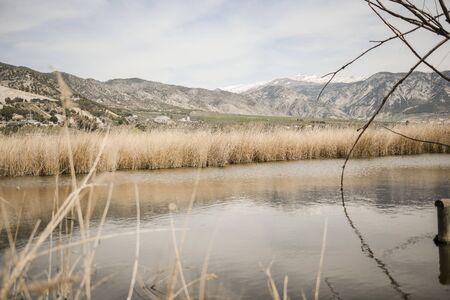 Wetlands with marsh vegetation in Padul, Granada, Andalusia 写真素材