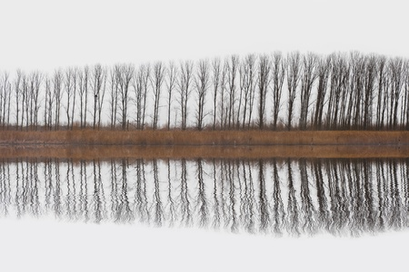 otras palabras clave: Row of trees reflection over a white background
