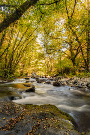 rushing river flows downstream between trees that have begun to change the colour of their leaves with the arrival of autumn, river Lor, Ferreiros de Abaixo, Sierra de Courel, Lugo, Galicia Spain, long exposure