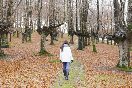 Young woman walking in a beech forest, in a cold day. Banque d'images