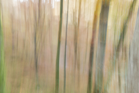 Abstract photography, with intentional camera movement, of woodland trees in Gorbea, Basque Country, Spain. 版權商用圖片