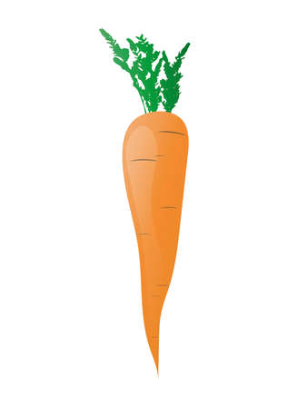 Vector isolated image of orange fresh carrots on white background in flat style. Vegetables detox. Product from the garden. For diets, cooking breakfast, lunch and dinner, salads. Illustration Icon