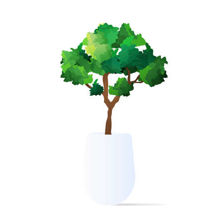 A small tree in a pot. Houseplant isolated on a white background. Vector illustration