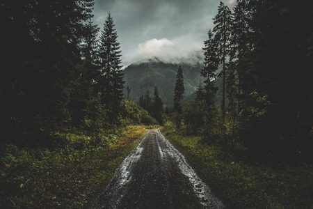 Road in the moody autumn forest