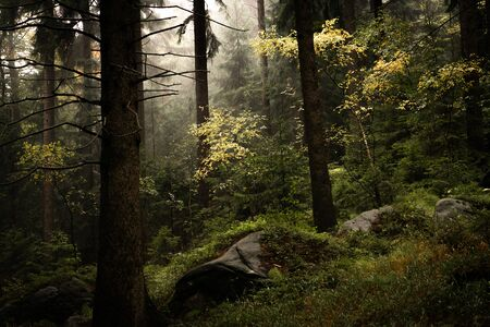 Misty forest and light shining through leaves in poland national park, Stolowe gory, Poland