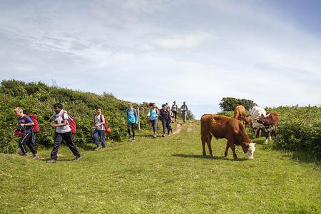 Gower, 영국 : 2016 년 7 월 14 일 : 견학을하는 학교 아이들은 국가 경로의 소 무리를지나 카메라를 향해 걸어 간다. 아이들의 일부는 긴장된 것처럼 보입니