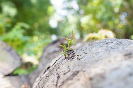 begining: La pianta giovane inizi La crescente da ceppo