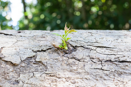 begining: The begining young plant growing from log Stock Photo
