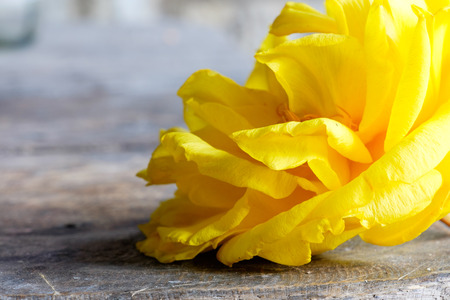 cotton flower: Yellow silk cotton flower on wood background Stock Photo