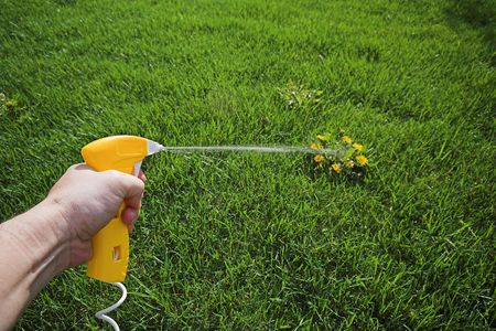 eliminate: weed killer on lawn Stock Photo