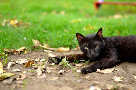 A dirty black stray cat sitting and relaxing in a park in mud 版權商用圖片