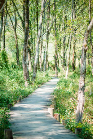 into: Pathway into the Woods Stock Photo