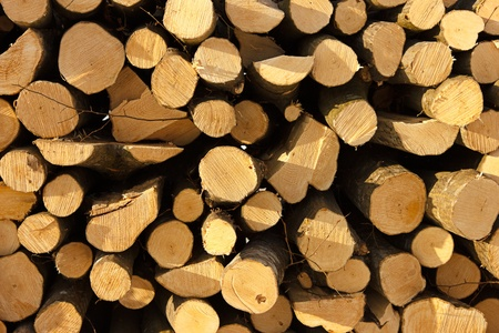 woodpile: Cut tree stumps which may be used as background or high resolution texture Stock Photo