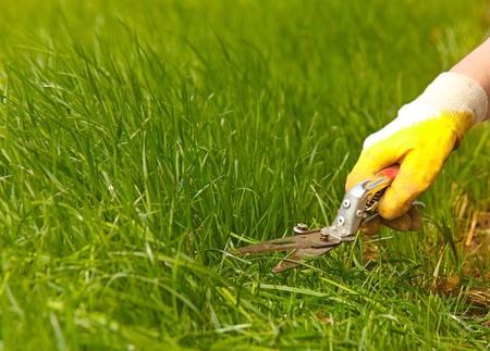 草の芝生トリミング、庭せん断および黄色い手袋と手 写真素材
