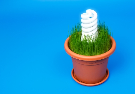 White eco spiral bulb light in a flower pot.Protect the nature and use eco energy.Blue background.Copy space on left for text. photo
