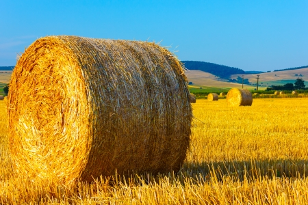 Big round straw bales in meadow.Mountains and blue sky as background. photo