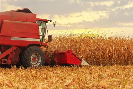 秋のトウモロコシ畑に取り組んで赤いハーベスタ