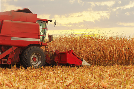 Red harvester working on corn field in autumn season