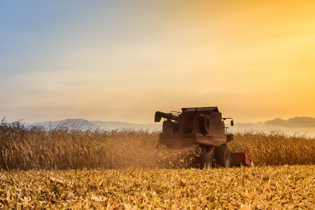 Red harvester working on corn field at sunset. Vintage effect. Archivio Fotografico