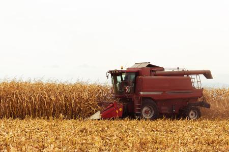 cosechadora: Cosechadora Roja trabajando en campo de maíz en la temporada de otoño