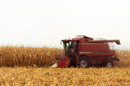 cereal plant: Red harvester working on corn field in autumn season