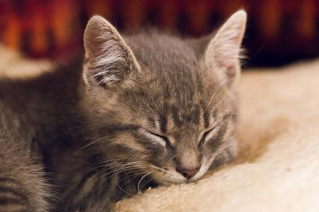 眠っている小さなかわいい猫 写真素材