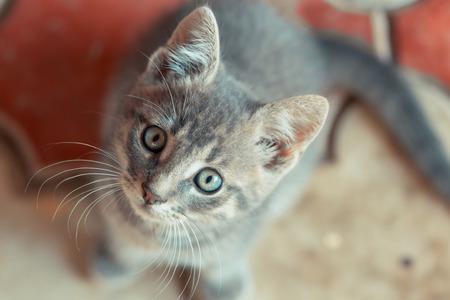 右側を見る小さなかわいい猫