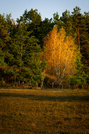 Fall colors came in July of 2014 in some parts of Sweden. Here in a rural landscape outside Stockholm. photo