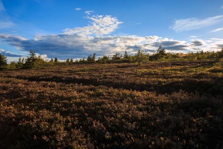 morass: Swedish Mountains landscape with Heather in moorland