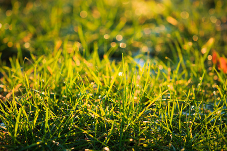 backlit: Macro close-up of back-lit grass Stock Photo